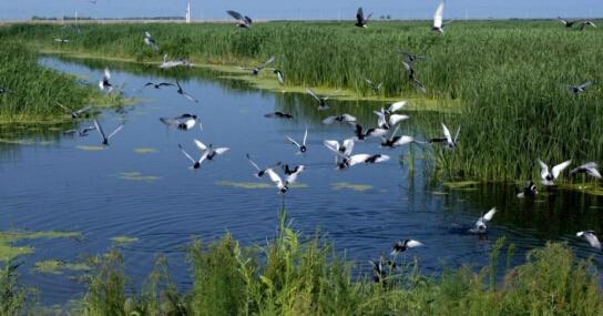 武清区自然地理和生态环境