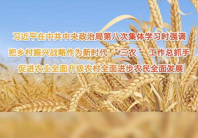 """习近平在中共中央政治局第八次集体学习时强调 把乡村振兴战略作为新时代""""三农""""工作总抓手 促进农业全面升级农村全面进步农民全面发展"""