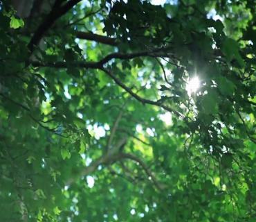 環境日|天津生態環境系統最動情的傳唱,獻給美麗中國