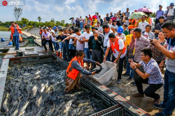 2019年9月21日,六郎镇政和大港村农民在拉网起鱼,享受丰收的喜悦。