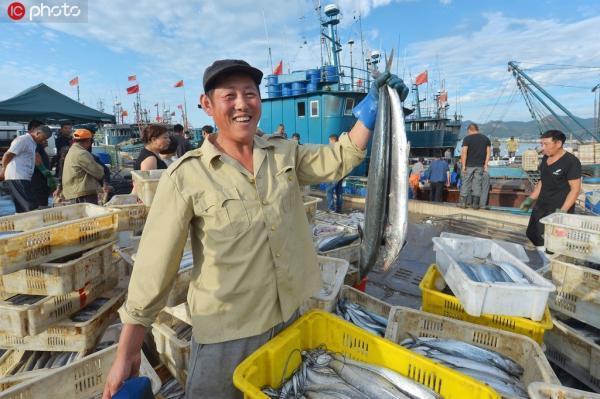 2019年9月21日,开海以来,海上粮仓喜获丰收。图为渔民在青岛市崂山区中心渔港展示刚刚上岸的鲅鱼。