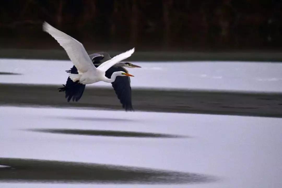 《天津日报》头版:生态补水让大黄堡湿地焕发青春!