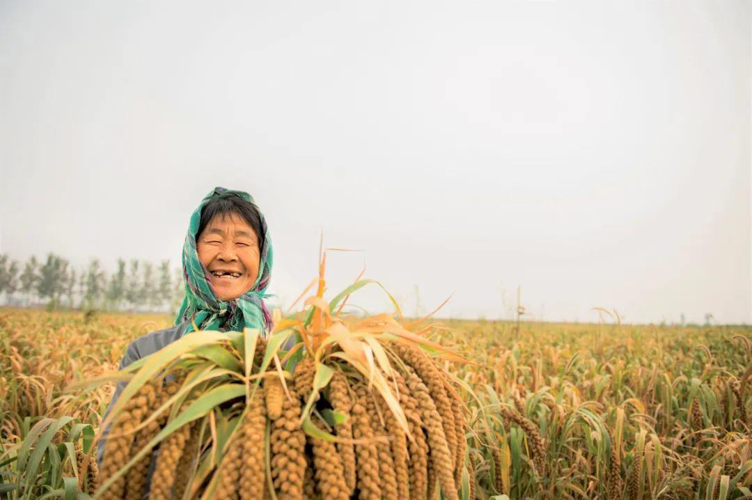 世界粮食日•镜头丨国以民为本 民以食为天